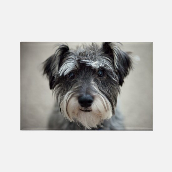 Schnauzer Rectangle Magnet