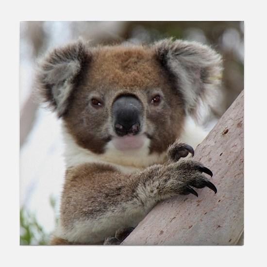 Cute Koala bears Tile Coaster
