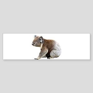 Australian Koala Photograph Bumper Sticker