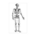Skeletons Sticker (Rectangle 50 pk)