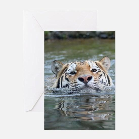 Tiger005 Greeting Cards