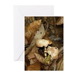 Woodland Floor - Pack Of 10 Greeting Cards