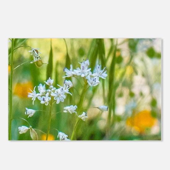 Cute Wildflower Postcards (Package of 8)