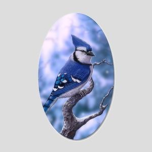 Blue Jay bird 20x12 Oval Wall Decal