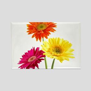 Daisy Gerbera Flowers Magnets