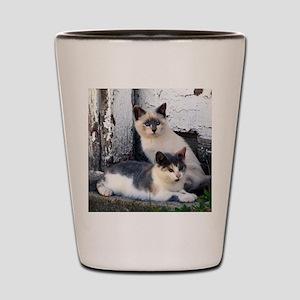 Barn Cats Shot Glass