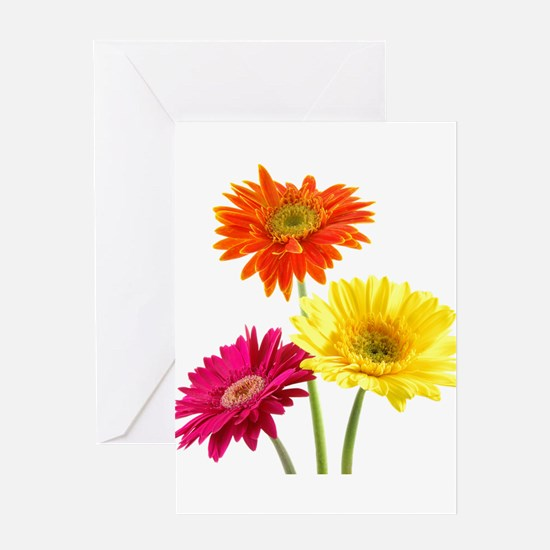 Daisy Gerbera Flowers Greeting Cards