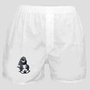 Havanese Bow Boxer Shorts