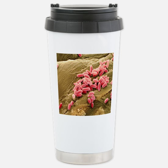 Pseudomonas aeruginosa  Stainless Steel Travel Mug