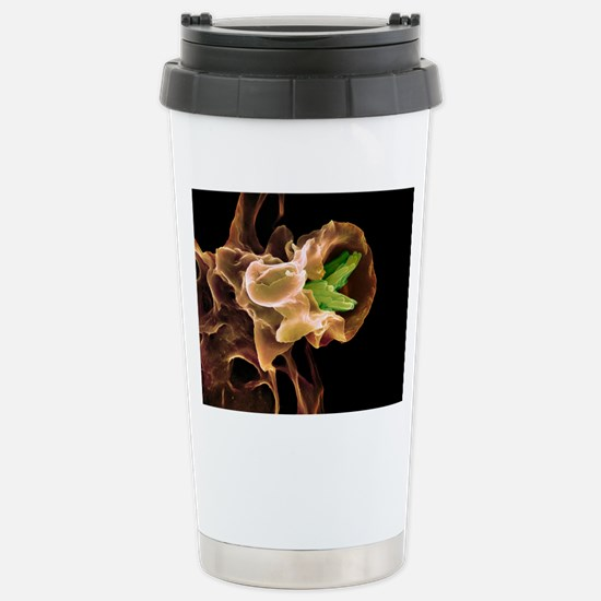 Macrophage engulfing TB Stainless Steel Travel Mug