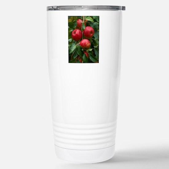 English eating apple, L Stainless Steel Travel Mug