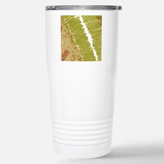 Intestinal microvilli,  Stainless Steel Travel Mug
