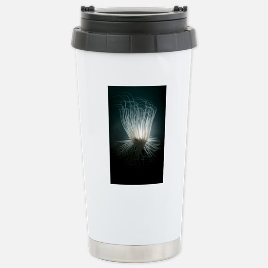 Tube anemone Stainless Steel Travel Mug