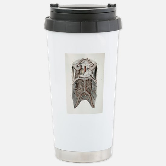 Circle of Willis nerves Stainless Steel Travel Mug