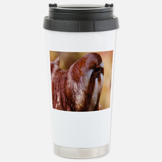 Day Octopus Stainless Steel Travel Mug