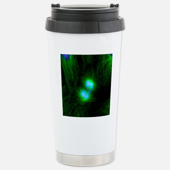 Cell division, fluoresc Stainless Steel Travel Mug