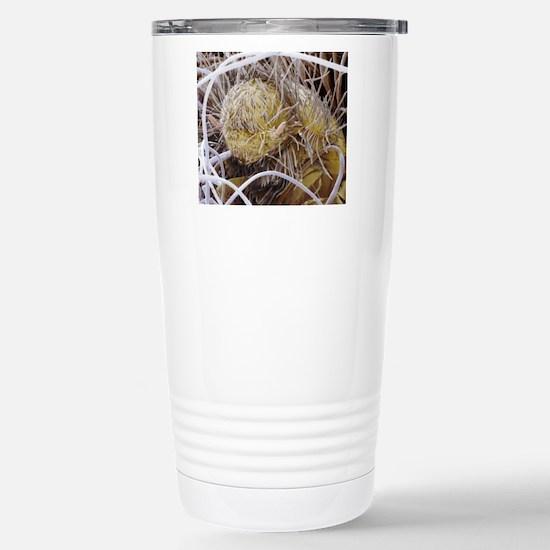 Carpet beetle larva Stainless Steel Travel Mug