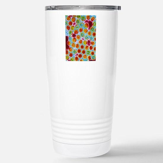 False-colour TEM of her Stainless Steel Travel Mug