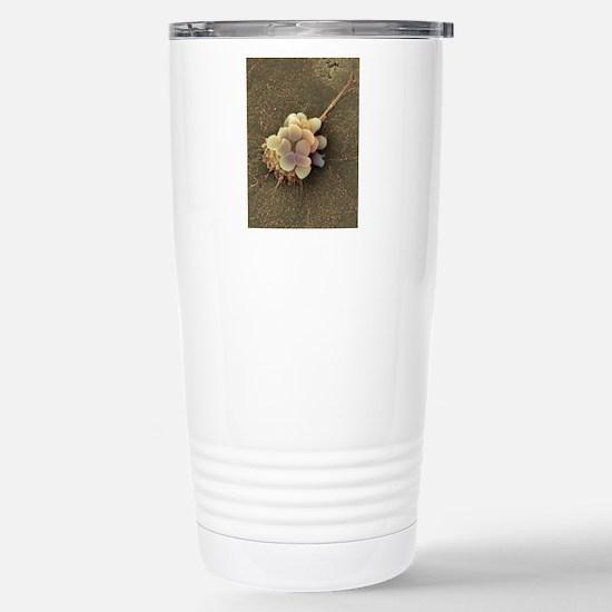 Ovarian cancer cell, SE Stainless Steel Travel Mug