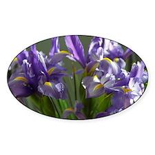 Twirl Purple Iris Flower Photo Sticker