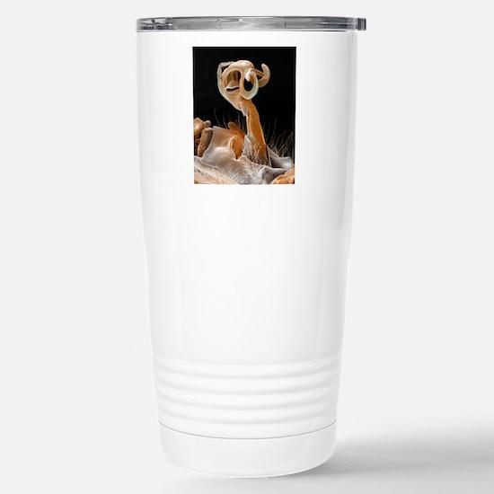 Damselfly penis, colour Stainless Steel Travel Mug