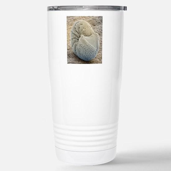 Foraminiferan fossil, S Stainless Steel Travel Mug