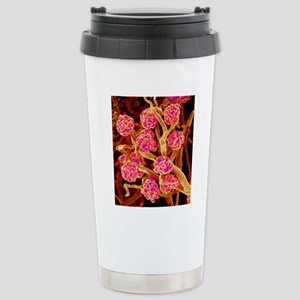 Kidney glomeruli, SEM Stainless Steel Travel Mug
