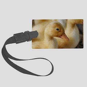 Peeking Ducks Luggage Tag
