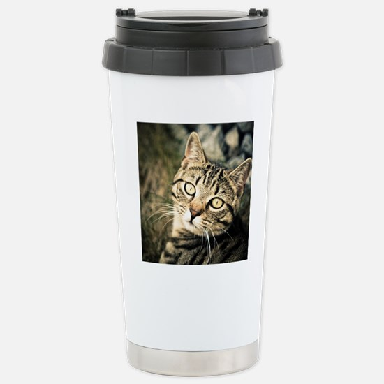 Domestic Cat Stainless Steel Travel Mug