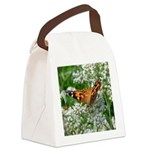 American Lady Butterfly in St Charles MO Canvas Lu