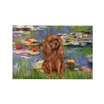 Lilies and Ruby Cavalier Rectangle Magnet (10 pack