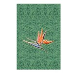 Bird of Paradise Postcards (Package of