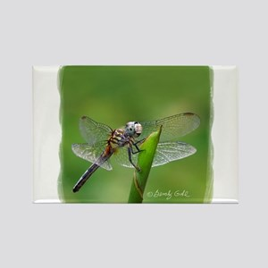 Happy Dragonfly-- Rectangle Magnet