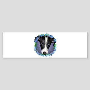 Italian Greyhound Bumper Sticker