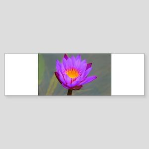 Purple Lotus Flower Bumper Sticker