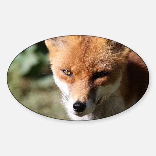 Fox001 Decal