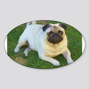 Pug lying down Sticker
