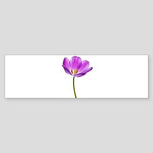 Purple Tulip Bumper Sticker
