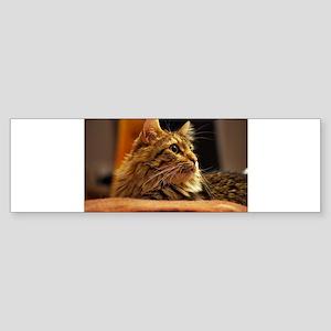 Cat ginger Sticker (Bumper)