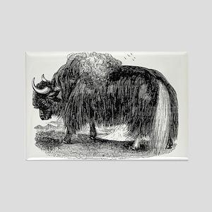 Vintage Yaks Illustration - 1800s Yak Images Magne