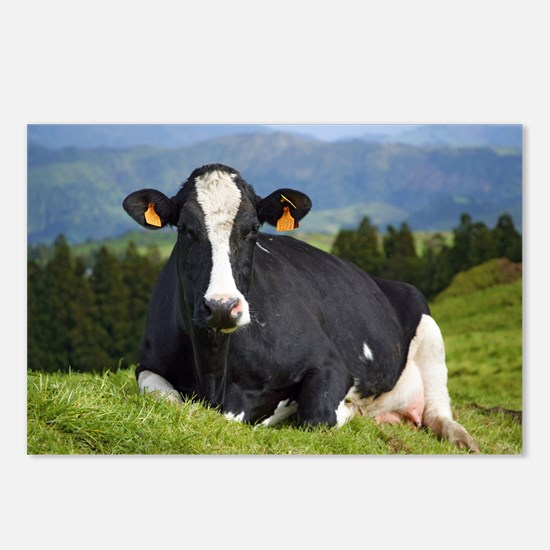 Holstein cow Postcards (Package of 8)