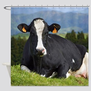 Holstein cow Shower Curtain