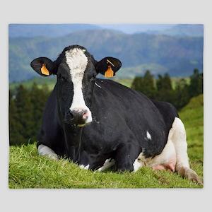 Holstein cow King Duvet