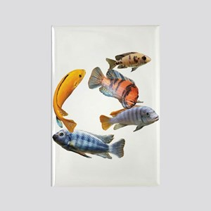 Cichlids Magnets