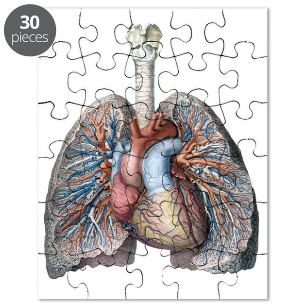 Human Anatomy Heart And Lungs Puzzle By Listing Store 14940502