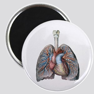 Human Anatomy Heart and Lungs Magnets