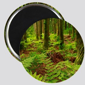 Ferns in the forest Magnets