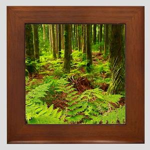 Ferns in the forest Framed Tile
