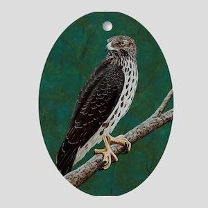 Cooper's Hawk: Ornament (Oval)
