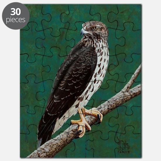 Cooper's Hawk: Puzzle